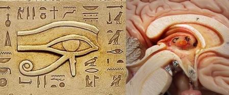 Glandula Pineal y Ojo de Horus